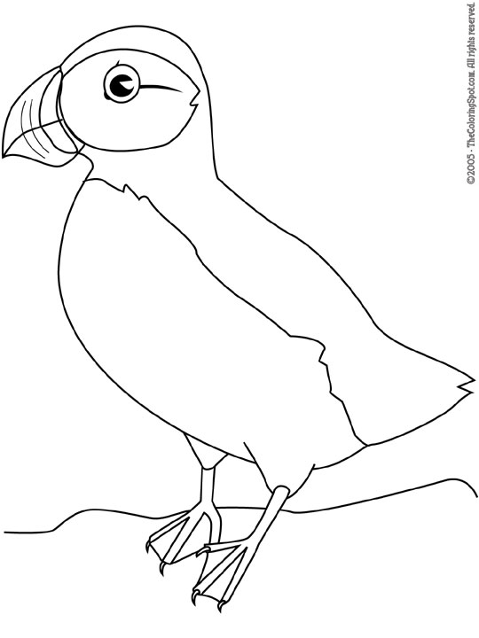 Puffin audio stories for kids free coloring pages from for Puffin coloring pages to print