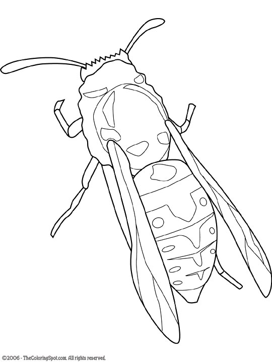 Eastern Yellow Jacket Coloring Page Pages Things Drudge Report Co