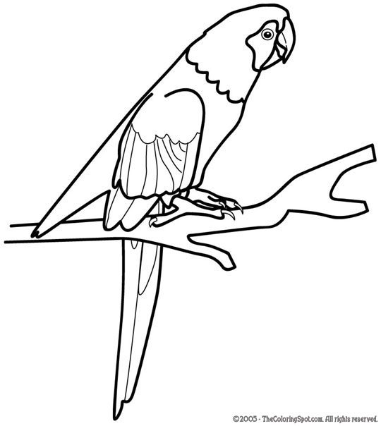 myna bird coloring pages - photo#27