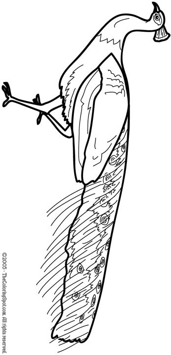 Peacock Coloring Page 1 Audio