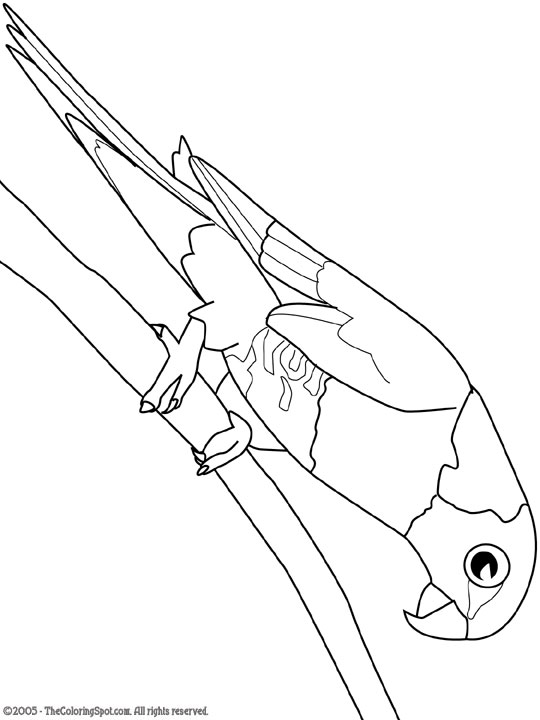 Rainbow Lorikeet Coloring Page