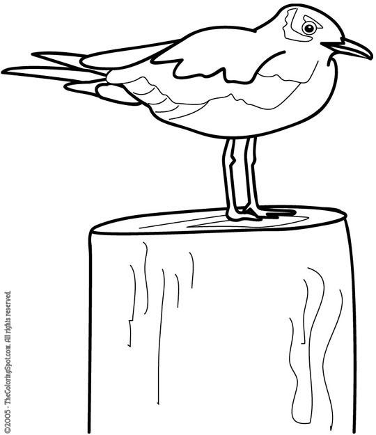 seagull2