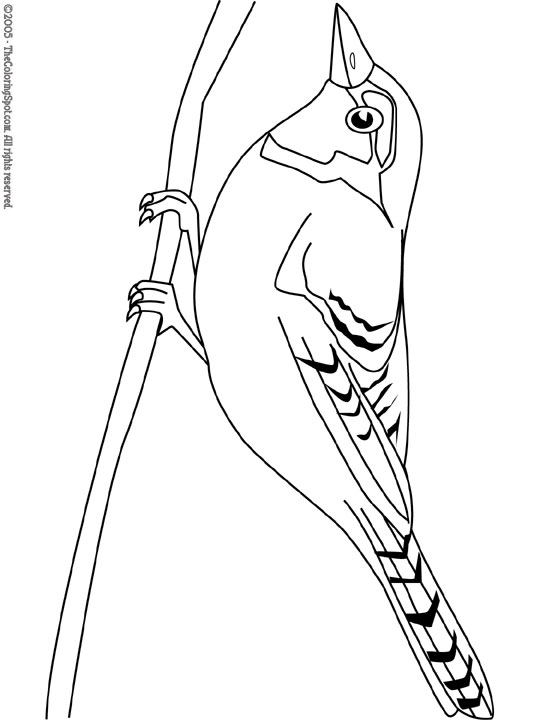 Blue Jay Feeding Young Coloring Page | 720x540