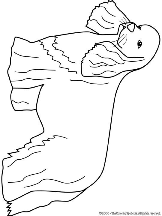 cocker-spaniel