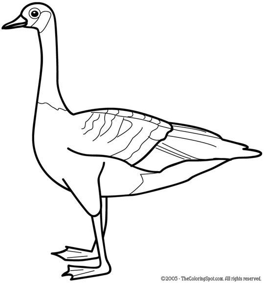 goose1