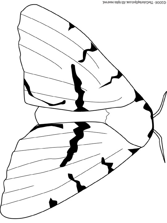 Gypsy Moth | Audio Stories for Kids & Free Coloring Pages from Light ...