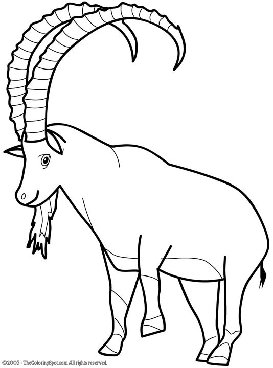 Ibex Goat Ibex Coloring Page | A...