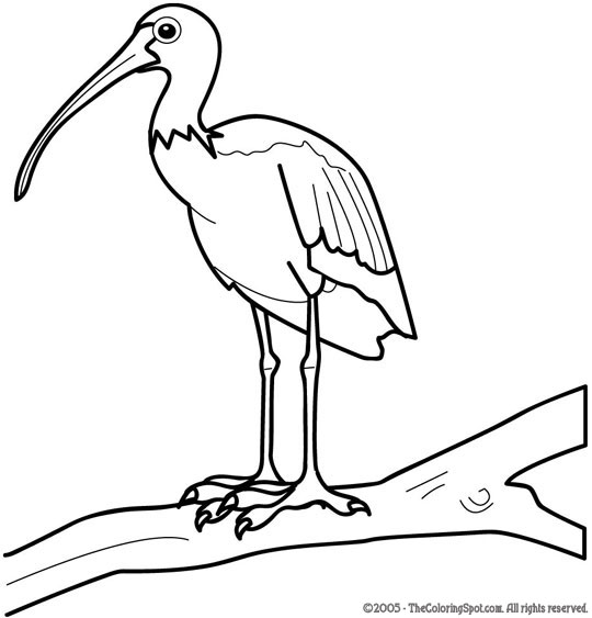 Ibis Coloring Page Audio Stories